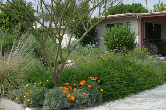 Lady gaga ombro desert front yard landscaping pictures - Desert landscape front yard ...